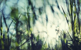 Обои блур, трава, небо