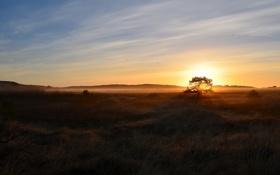 Картинка поле, пейзаж, природа, туман, дерево, утро