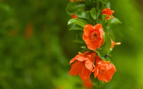 Обои зелень, листья, макро, цветы, растение, ветка, размытость
