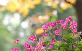 Обои цветы, блики, розовые, клумба