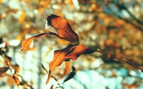 Обои осень, листья, природа, листва, листки, макро фото, осенние картинки