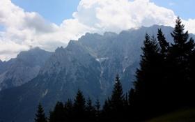 Обои деревья, горы, природа, фото, пейзажи, ели, ёлка
