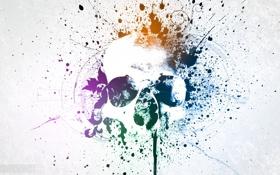 Обои цвета, череп, минимализм, пятна