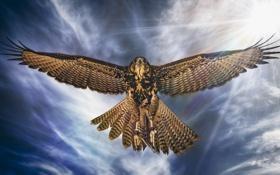 Обои птица, крылья, полёт, ястреб