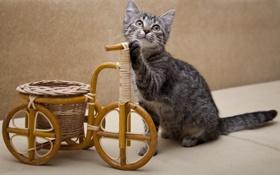 Обои котёнок, тачка, колёса
