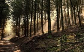Картинка дорога, лес, природа, туман, фото, утро