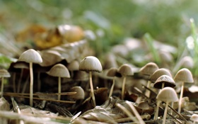 Картинка лес, природа, грибы, шляпки, резкость, семейство, фокут