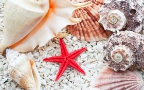 Обои ракушки, морская звезда, камешки