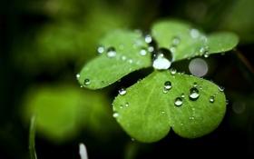 Картинка зелень, капли, макро, природа, фото, фон, обои