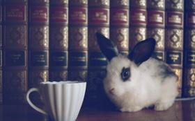 Обои книги, кролик, чашка
