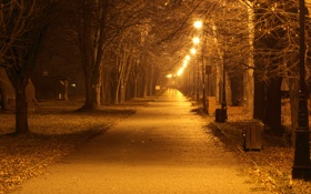 Обои осень, деревья, lights, фары, trees, autumn, street