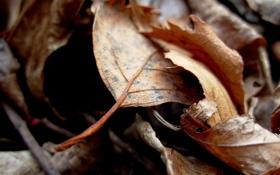 Обои осень, листья, макро, фото, осенние обои