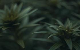 Обои трава, куст, растение, насекомое, жук, макро