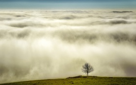 Обои газон, облака, трава, высота, дерево, крона, холм