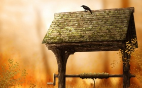 Обои птицы, природа, птица, обои, колодец