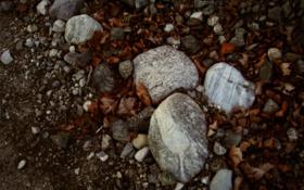 Обои листья, камни, обои на рабочий стол, фото, природа, макро