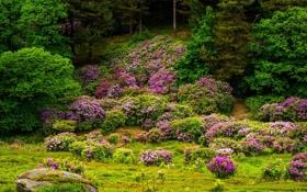 Обои деревья, цветы, камни, цветение, кустарники