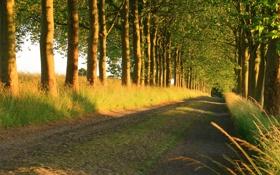 Картинка природа, деревья, дорога, лето