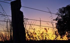 Обои закат, макро, проволка, ограждение, природа