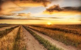 Картинка закат, пейзаж, поле, дорога