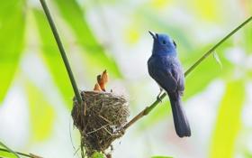 Картинка ветки, птица, гнездо, птенец