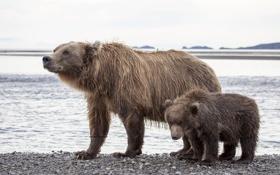 Обои природа, река, медведи