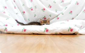 Картинка котенок, одеяло, голубые глаза, ушки, прячется, хвостик
