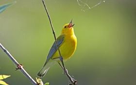 Картинка птица, паутина, ветка, перья, клюв