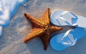 Обои summer, beach, sea, sand, vacation, starfish, step-ins