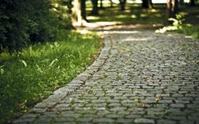 Обои дорожка, камень, зелень, лето