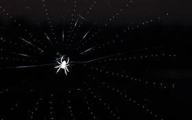 Картинка паук, паутина, ночь, spider, макро