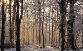 Обои зима, иней, лес, деревья