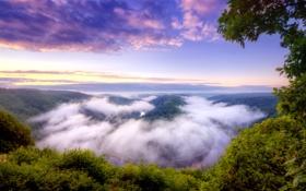 Обои лес, природа, туман, река, Германия