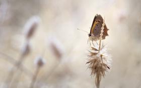 Обои бабочка, цветы, лето
