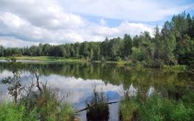 Обои лес, небо, облака, деревья, пейзаж, озеро, Alaska