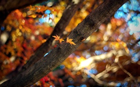 Картинка осень, листья, цвета, солнце, лучи, свет, ветки