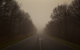 Обои фото, дороги, деревья, дорога, туман, лес, пейзажи