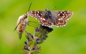 Картинка цветок, муха, бабочка, растение