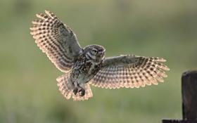 Обои сова, птица, забор, крылья, посадка