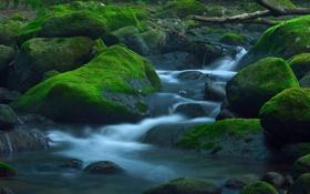 Обои лес, река, ручей, камни, мох, поток