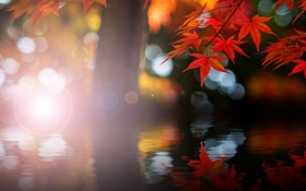 Картинка осень, блики, клён, рябь, отражение, вода, красный
