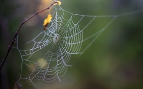 Картинка природа, фон, паутина