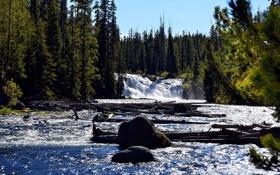 Обои лес, река, камни, поток, ели, бревна
