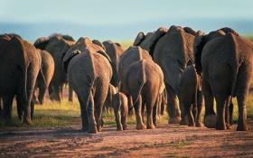 Обои животные, пыль, вечер, африка, слоны, дикая природа