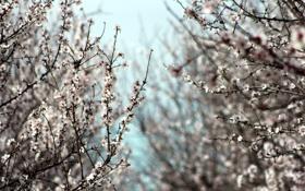 Картинка деревья, природа, красота, весна, сад