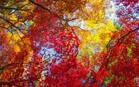 Обои листья, деревья, осень, небо, багрянец