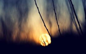 Картинка солнце, закат, природа, фото, фон, обои, растения