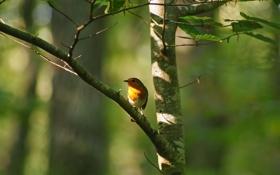 Картинка зелень, листья, дерево, ветка, птичка