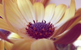 Обои цветок, цвета, макро, лепестки, размытость, тычинки, серединка