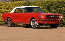 Обои красный, конь, Mustang, классика, 1964, Convertible, мягкий верх